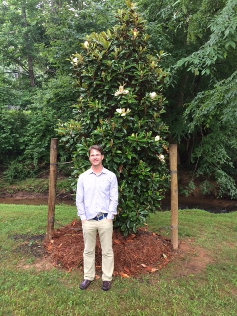 Bracken S Brown Beauty Southern Magnolia Southern Magnolias Home