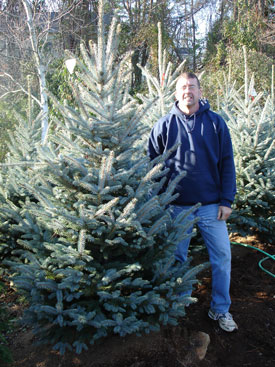 Fat Albert Colorado Blue Spruce Image