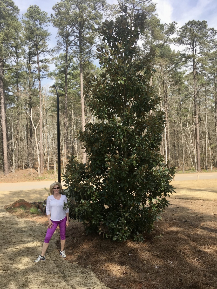 Southern-Magnolia-22-ft-scaled